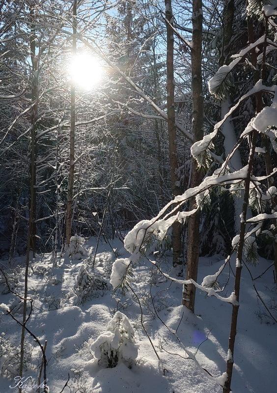 雪_a0353839_04523017.jpg
