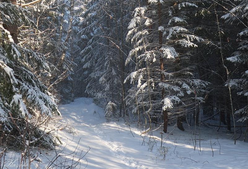 雪_a0353839_05131253.jpg