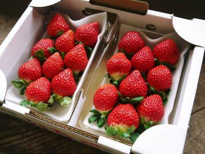 熊本限定栽培品種のイチゴ『熊紅(ゆうべに)』 大好評に付、は少々お待たせする場合がございます!_a0254656_17203585.jpg