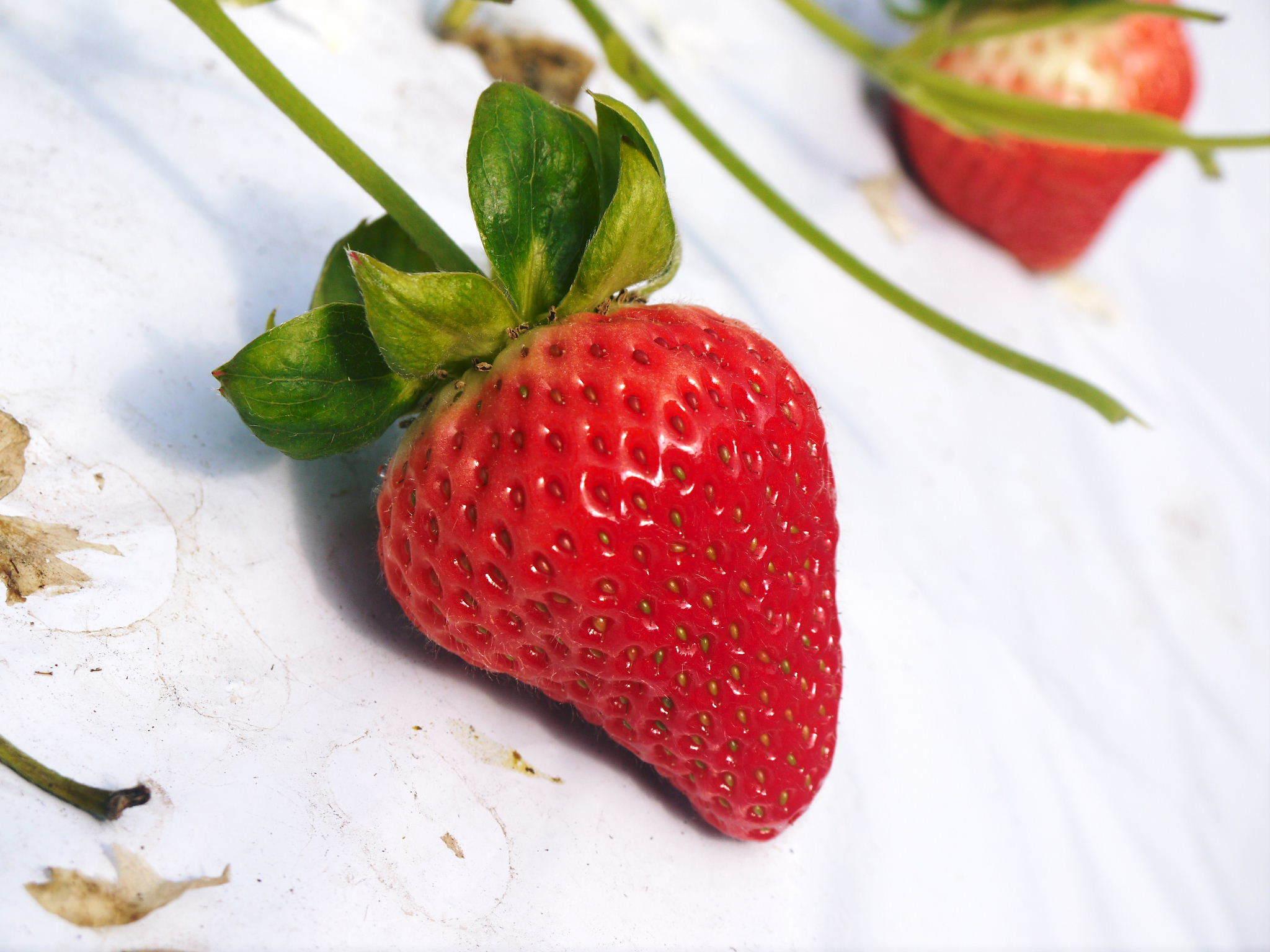 熊本限定栽培品種のイチゴ『熊紅(ゆうべに)』 大好評に付、は少々お待たせする場合がございます!_a0254656_17263306.jpg