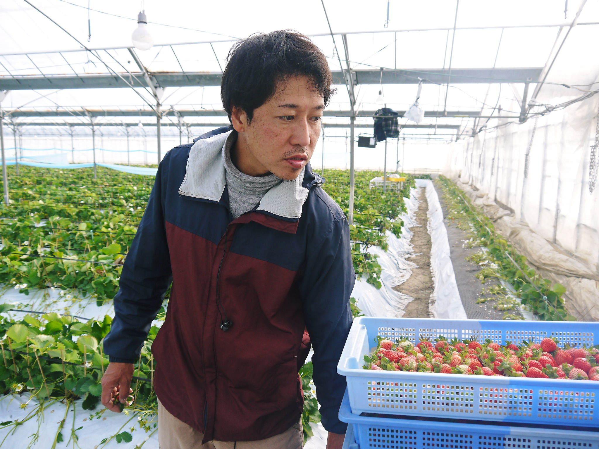 熊本限定栽培品種のイチゴ『熊紅(ゆうべに)』 大好評に付、は少々お待たせする場合がございます!_a0254656_17570065.jpg
