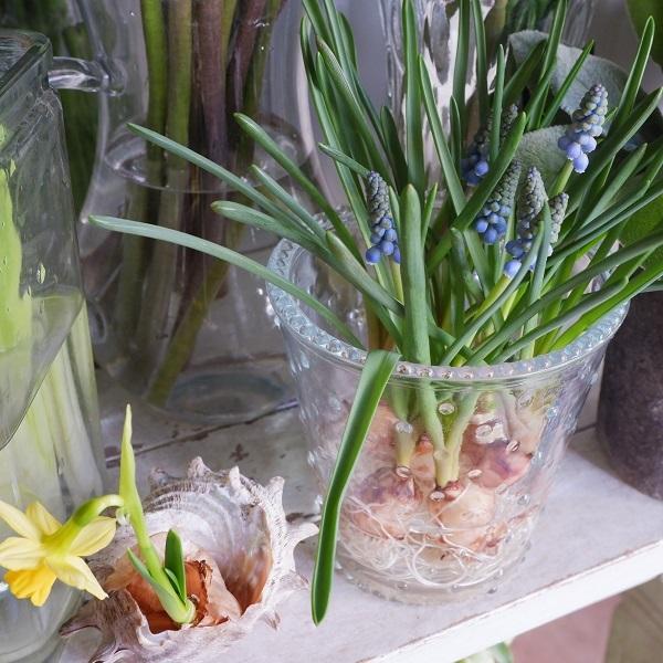 オークリーフ(春の花)_f0049672_23043586.jpg