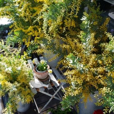 オークリーフ(春の花)_f0049672_23054475.jpg