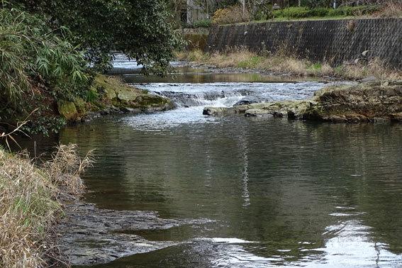 まだまだ冷たい川の水_b0145296_08550254.jpg