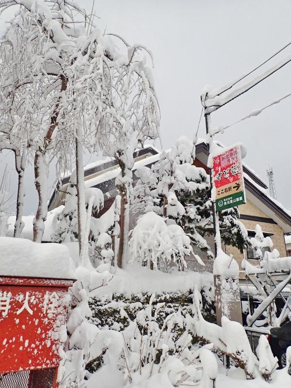 ようやく冬らしい朝でした!_c0336902_21083148.jpg