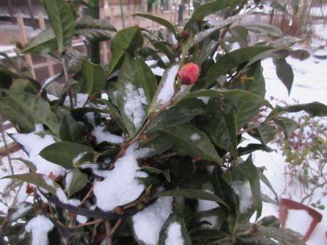 真冬日・消雪パイプ_a0203003_17514348.jpg