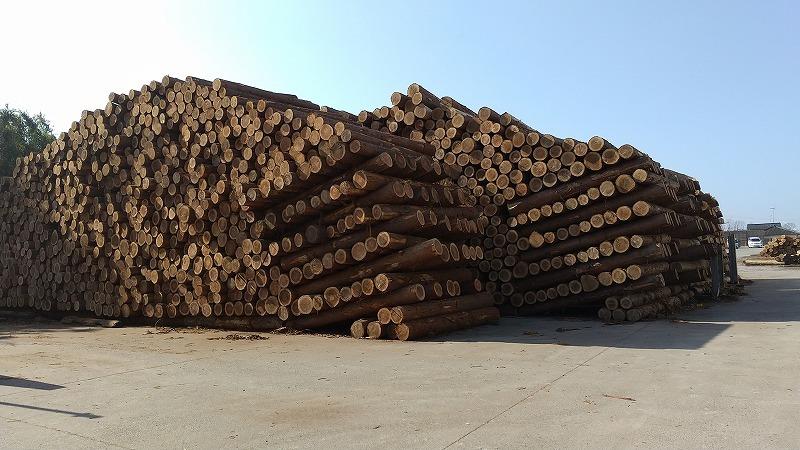 静岡県産木材を積極的に利活用を!_d0050503_09083682.jpg