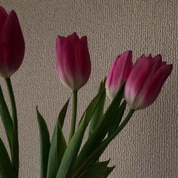 立春を前に_a0201204_08131018.jpg