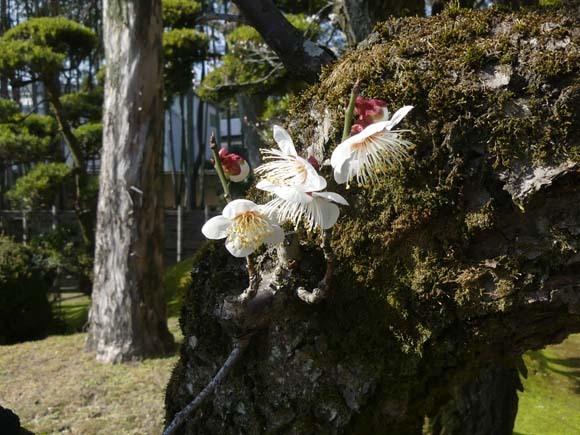 松花堂庭園_e0048413_15155277.jpg