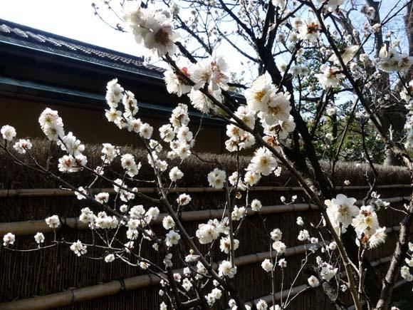 松花堂庭園_e0048413_15160076.jpg