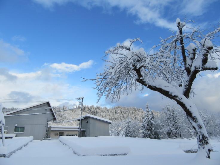 雪国になりました。_f0067514_21122144.jpg