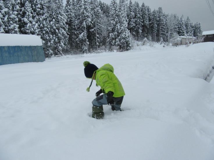 雪国になりました。_f0067514_21140009.jpg