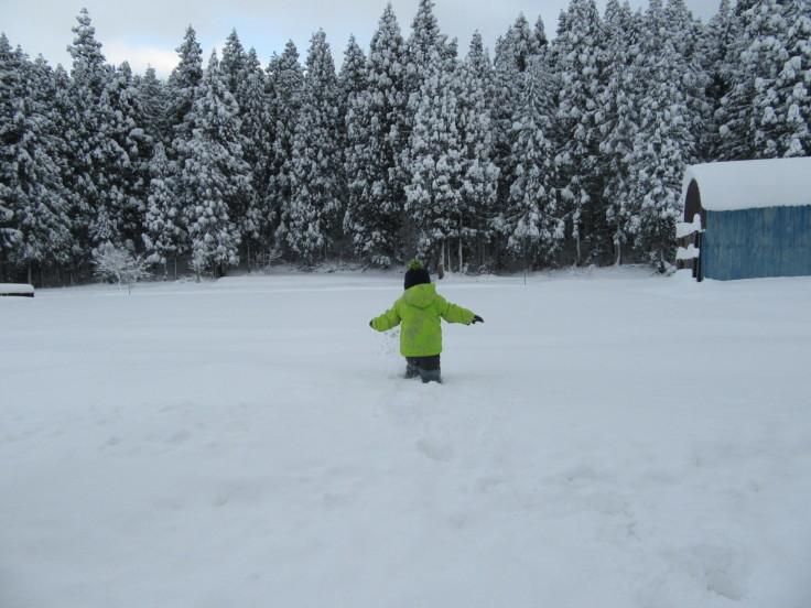 雪国になりました。_f0067514_21142001.jpg