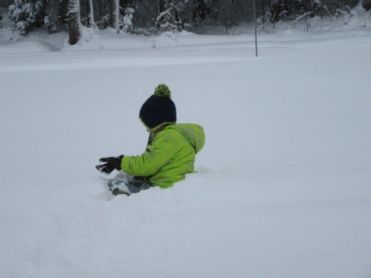 雪国になりました。_f0067514_21143578.jpg