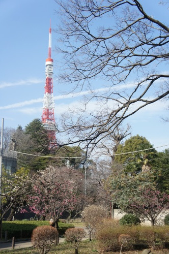 【芝公園(東京都港区)梅が咲いていました】_f0215714_16370191.jpg