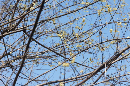 【芝公園(東京都港区)梅が咲いていました】_f0215714_16382801.jpg