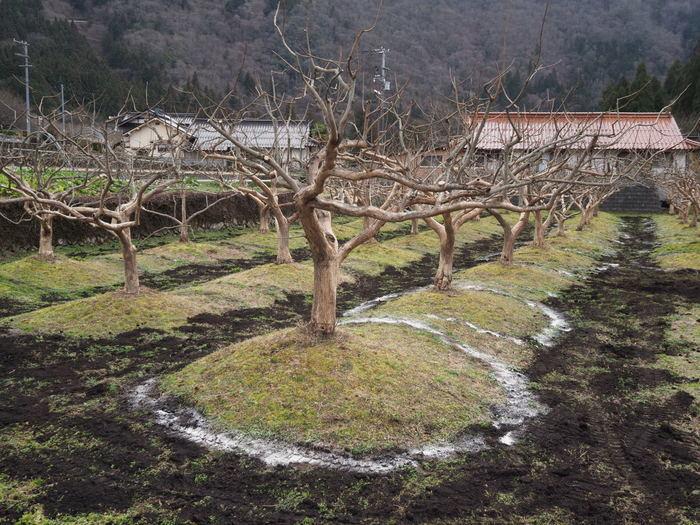 祇園坊の柿の木_c0116915_23575676.jpg