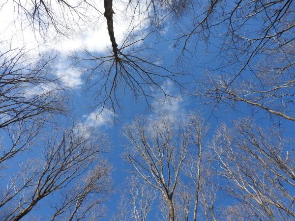 今週末の天気と気温(2020年2月6日):-10℃下回るかも?_b0174425_21150546.jpg