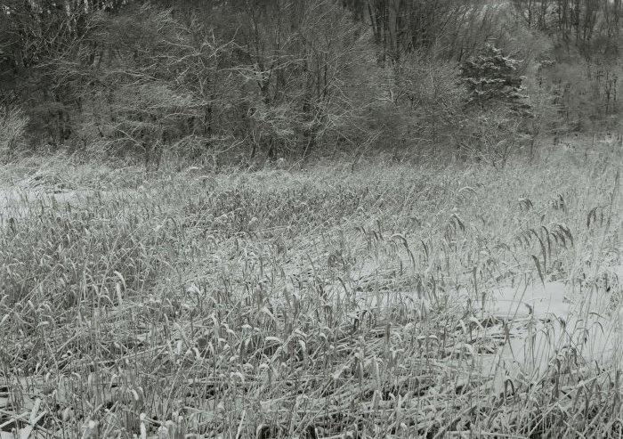 フィルムの力  富士フイルム ACROSⅡ企画展 和美・Katachi _f0050534_07510704.jpg