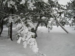 初雪あそび_b0177436_23013907.jpg