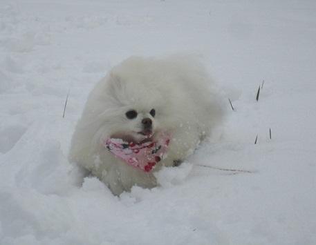 初雪あそび_b0177436_23040058.jpg