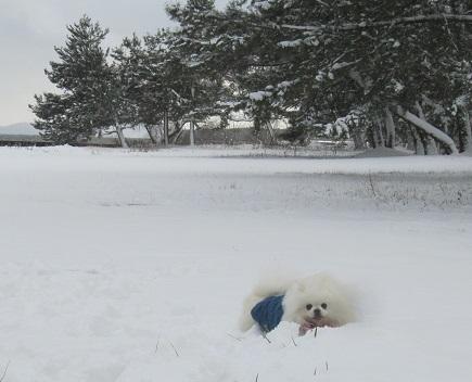 初雪あそび_b0177436_23060044.jpg