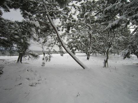 初雪あそび_b0177436_23110660.jpg