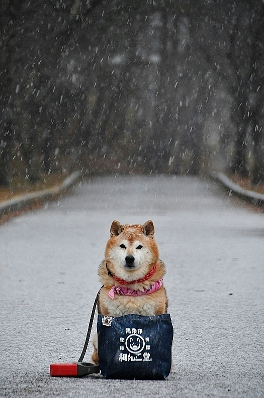 雪しんしん_b0314043_07515720.jpg