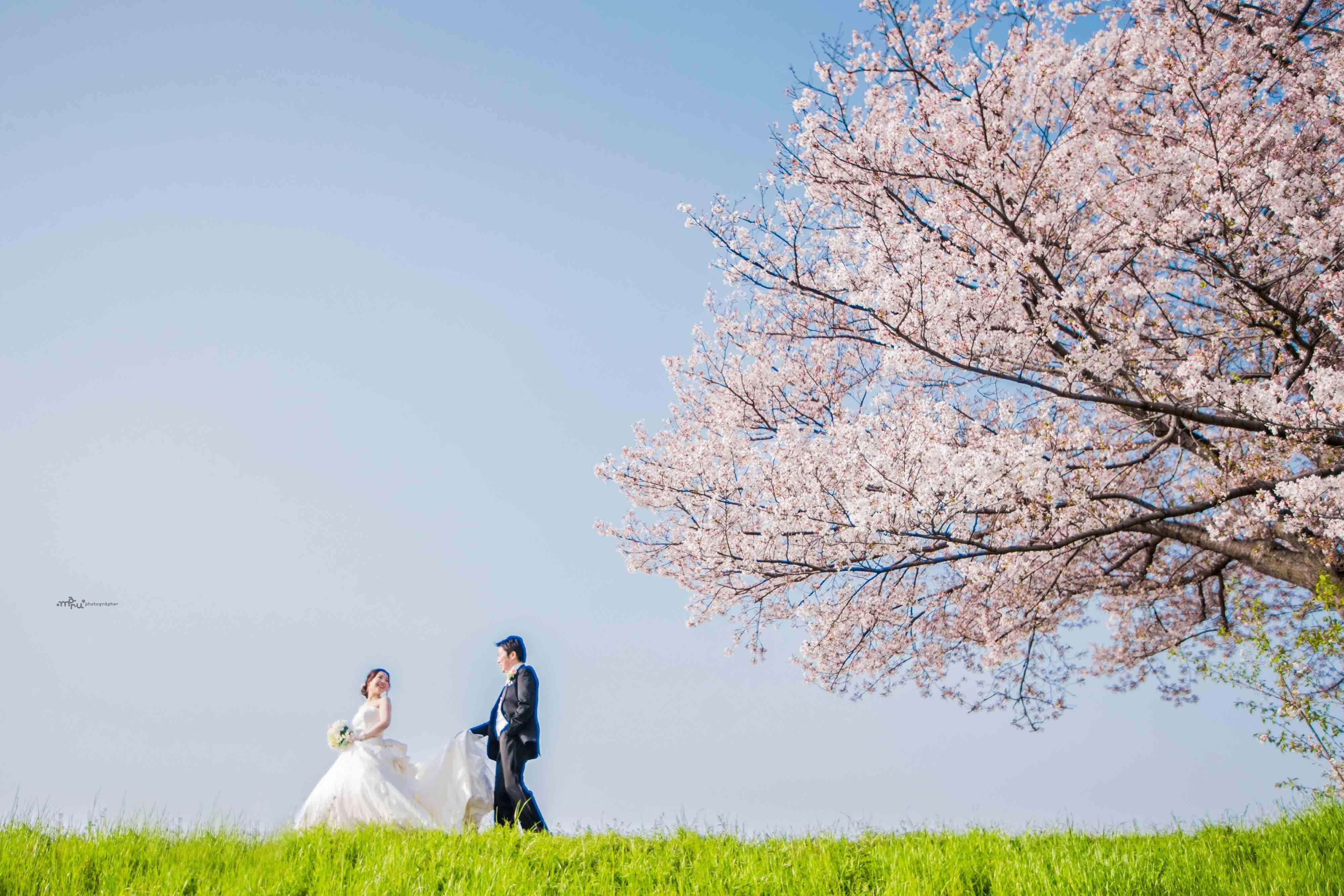 桜 前撮り_c0344245_00051665.jpg