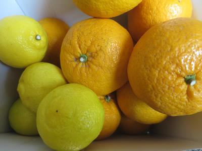 柑橘の香りに包まれて_e0262651_17411169.jpg