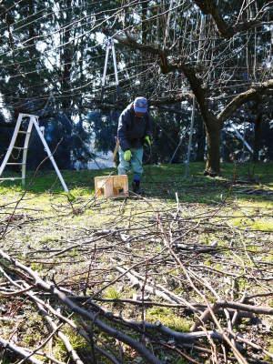 熊本梨 岩永農園 匠の剪定と誘引作業!(2020) 今年も木漏れ日のステージを作ります!(前編)_a0254656_17203757.jpg