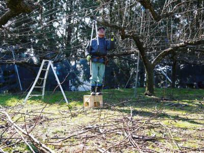 熊本梨 岩永農園 匠の剪定と誘引作業!(2020) 今年も木漏れ日のステージを作ります!(前編)_a0254656_17215464.jpg