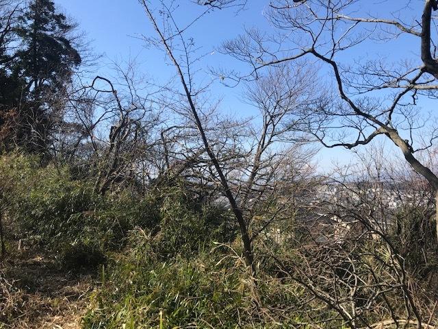植樹した河津桜開花、ヤマザクラの芽も膨らむ2・5_c0014967_10110066.jpg