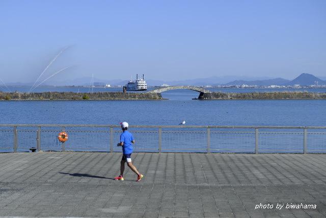 大津港のユリカモメ_b0055171_23295557.jpg