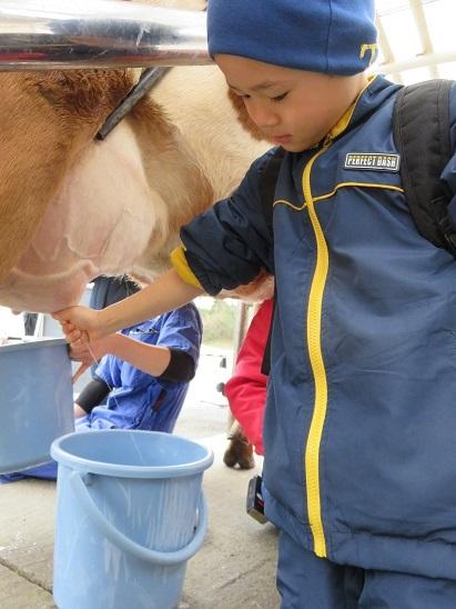 牛の乳搾り体験 こどもの国(1)2020.1.4_b0085872_09495309.jpg