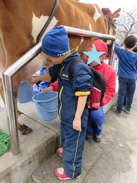 牛の乳搾り体験 こどもの国(1)2020.1.4_b0085872_09495393.jpg