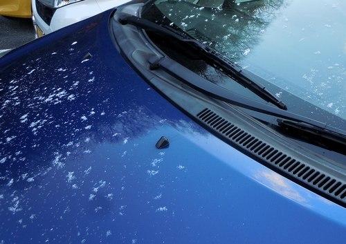やっと初雪が ・・・_b0102572_13285900.jpg