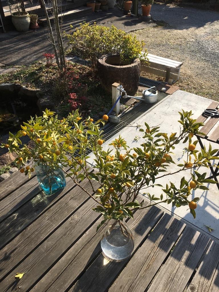金柑の枝をフラスコに挿して_c0334574_14381619.jpeg
