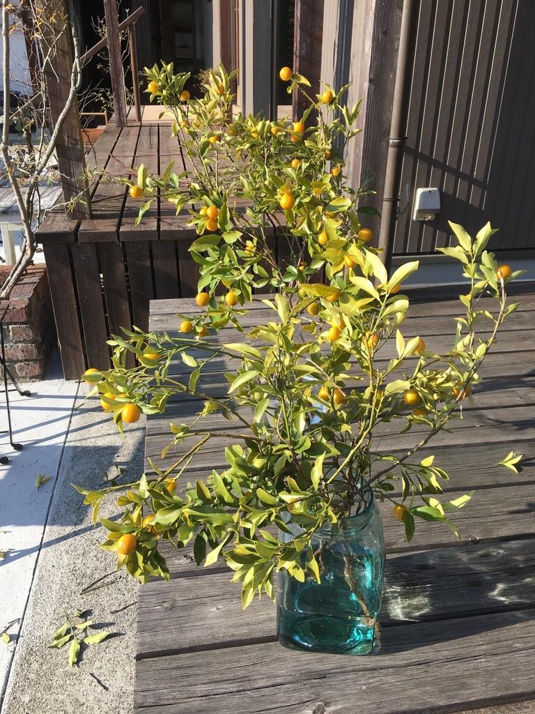 金柑の枝をフラスコに挿して_c0334574_14391252.jpeg