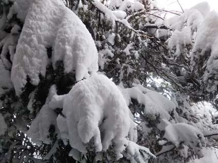 2月6日積雪あり。_b0126182_09050660.jpg