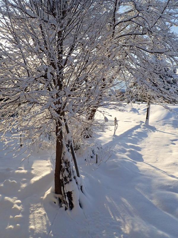 寒い朝、兼業農家の出勤前の風景です_c0336902_21371923.jpg