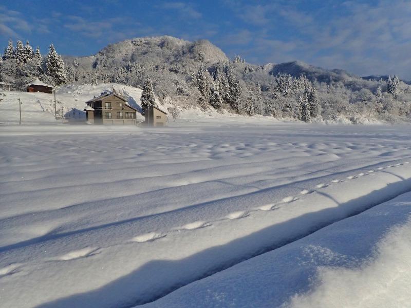寒い朝、兼業農家の出勤前の風景です_c0336902_21373917.jpg