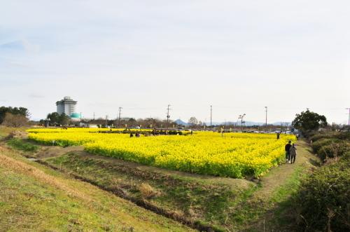 滋賀 また第一なぎさ公園へ_c0043403_21512636.jpg