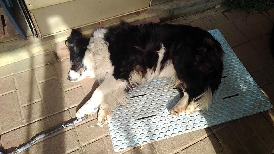 【犬】寒いけどマッタリと・・・_f0141609_13145296.jpg