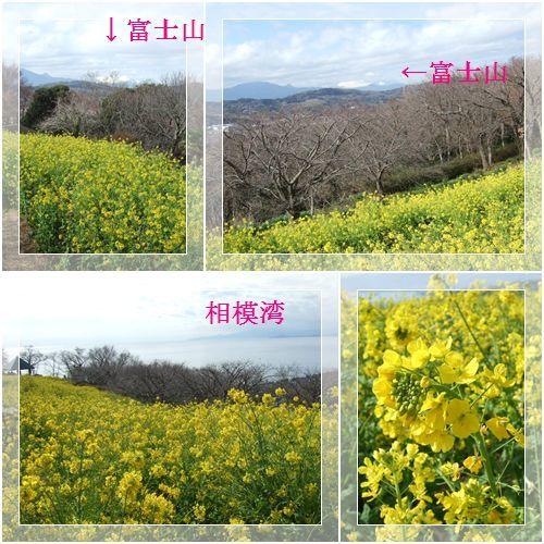 2月7日(金) 二宮 吾妻山公園_d0048312_20502336.jpg