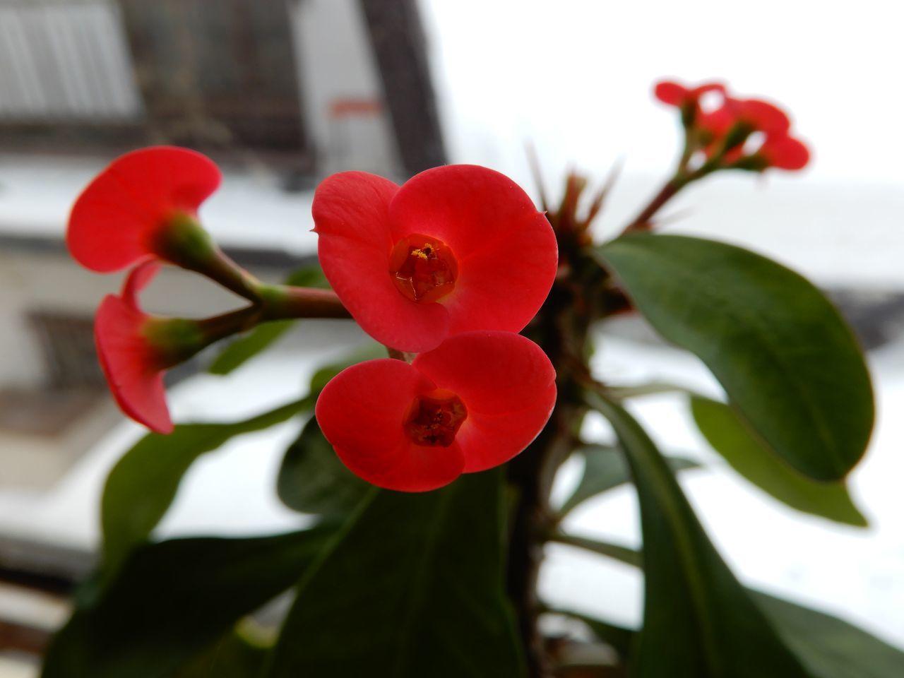 昨日ほど寒くはないけど真冬日_c0025115_21590541.jpg