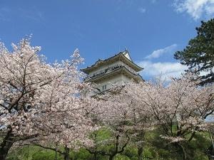 4月4日(土)小田原城と桜を見に行こう_c0110117_14302053.jpg