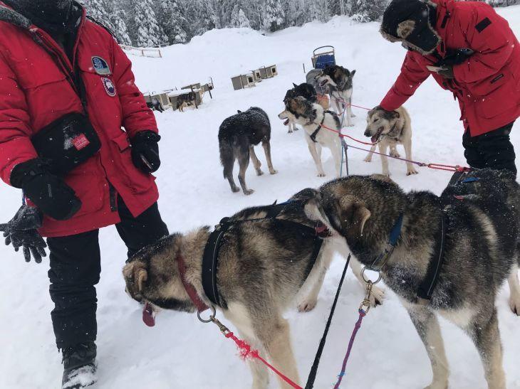 犬ぞり体験_b0135948_12574398.jpg