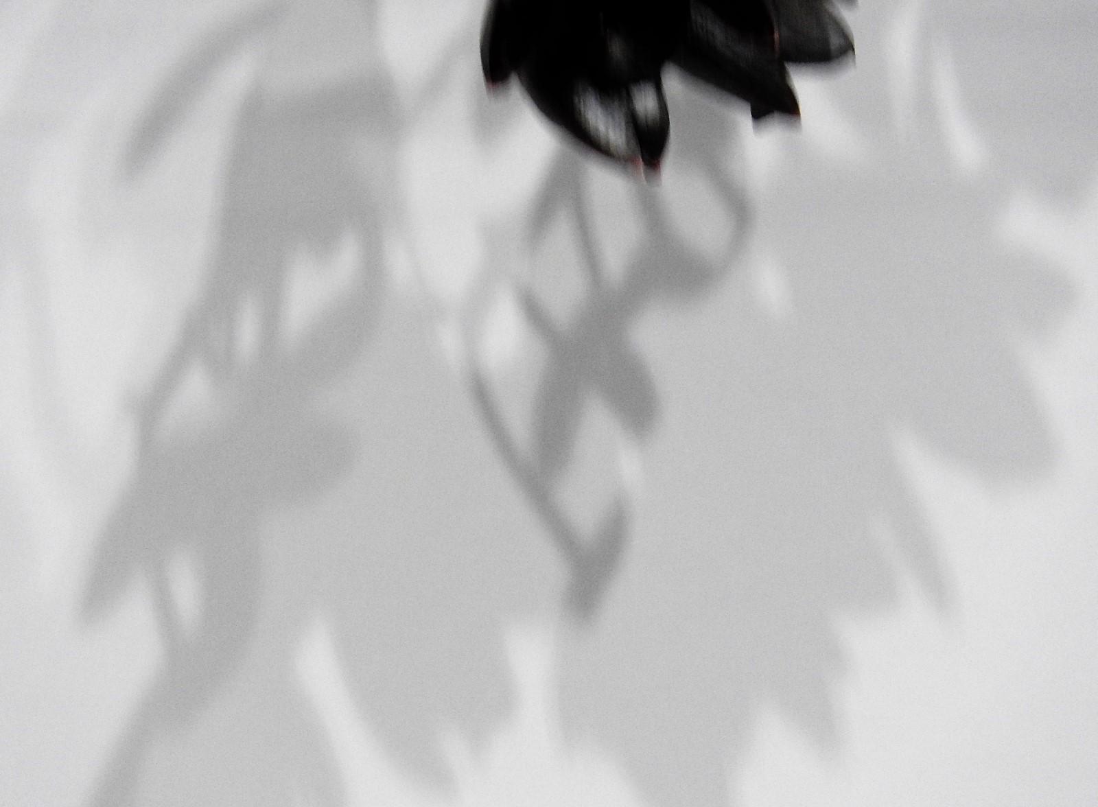 影が主役_e0406450_18225140.jpg