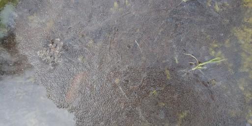 山田パンダ、こたつで丸くなりたい氷の世界。_b0096957_14165962.jpg